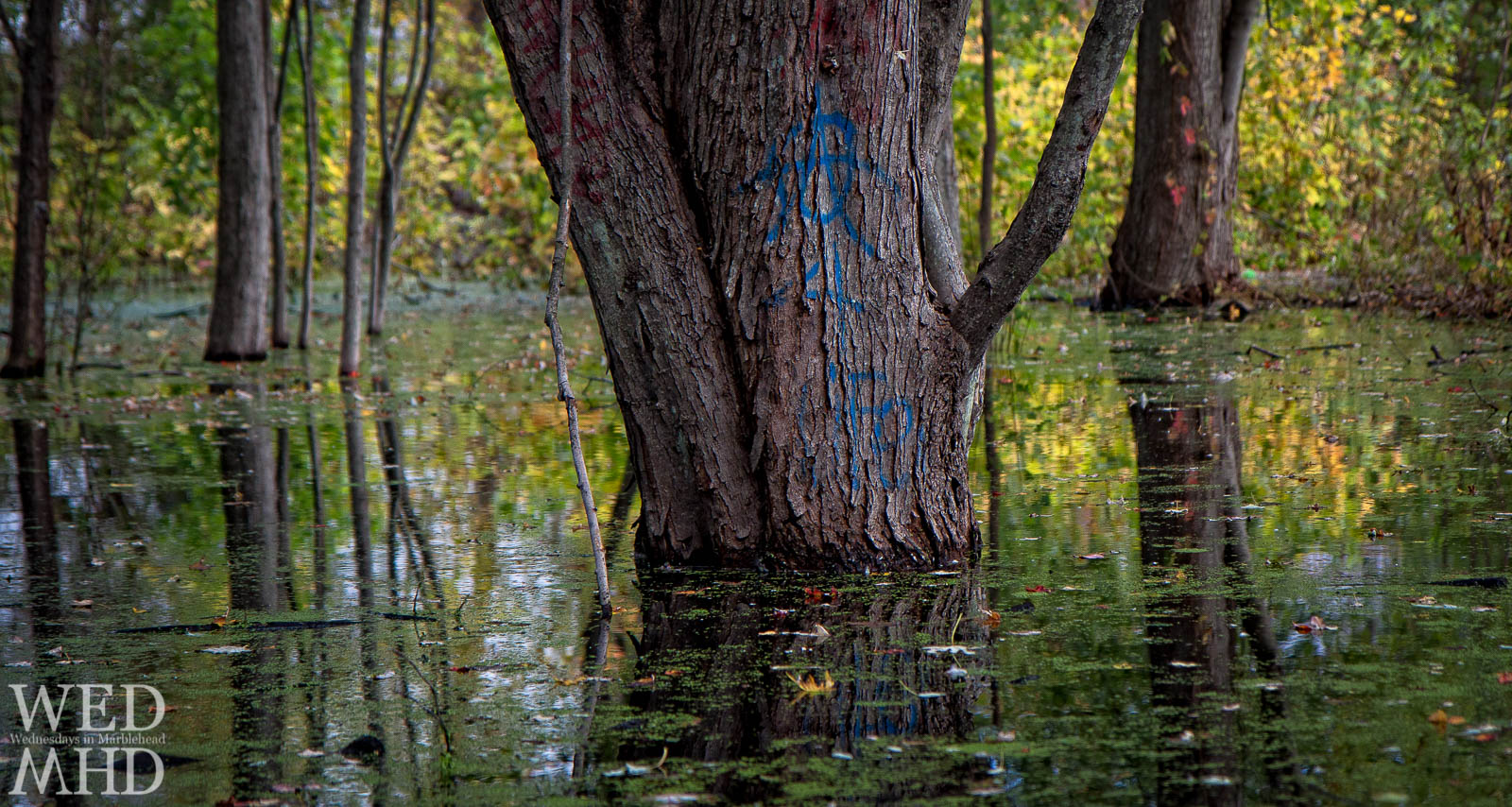 Trees Rise from a Colorful Swamp