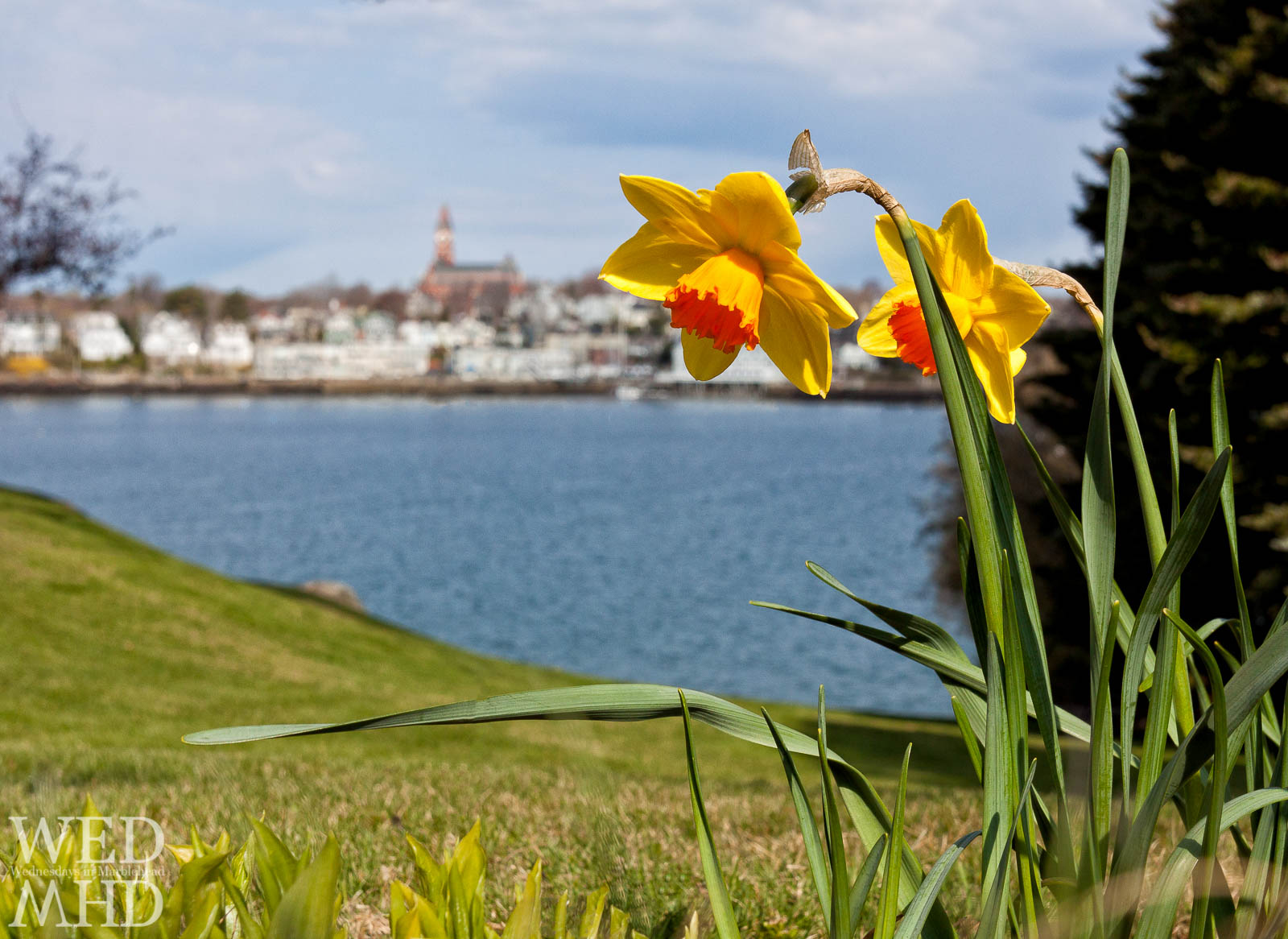 Spring in Marblehead – Flowers and Abbot Hall