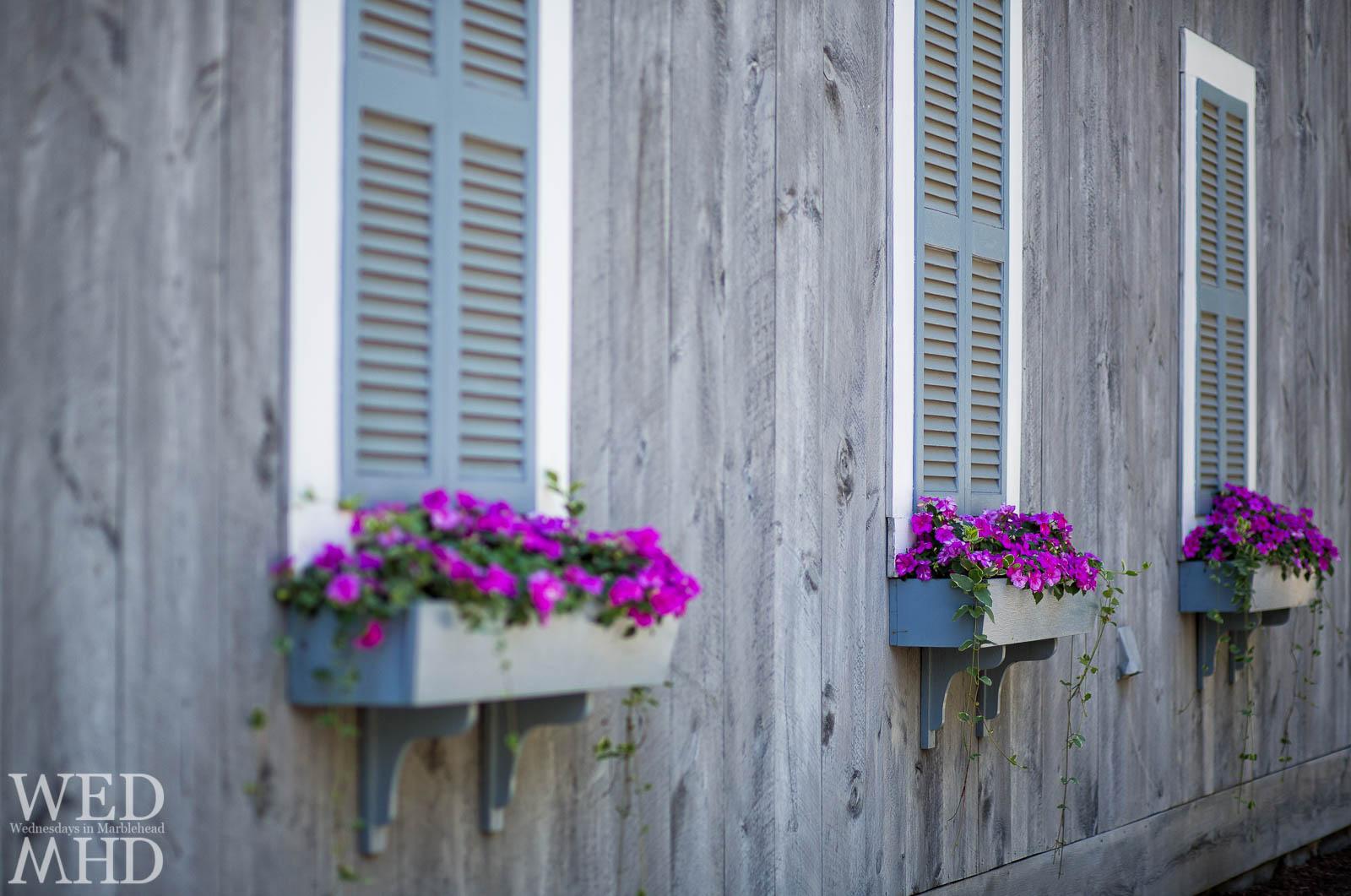 Flower Boxes on Ocean Avenue