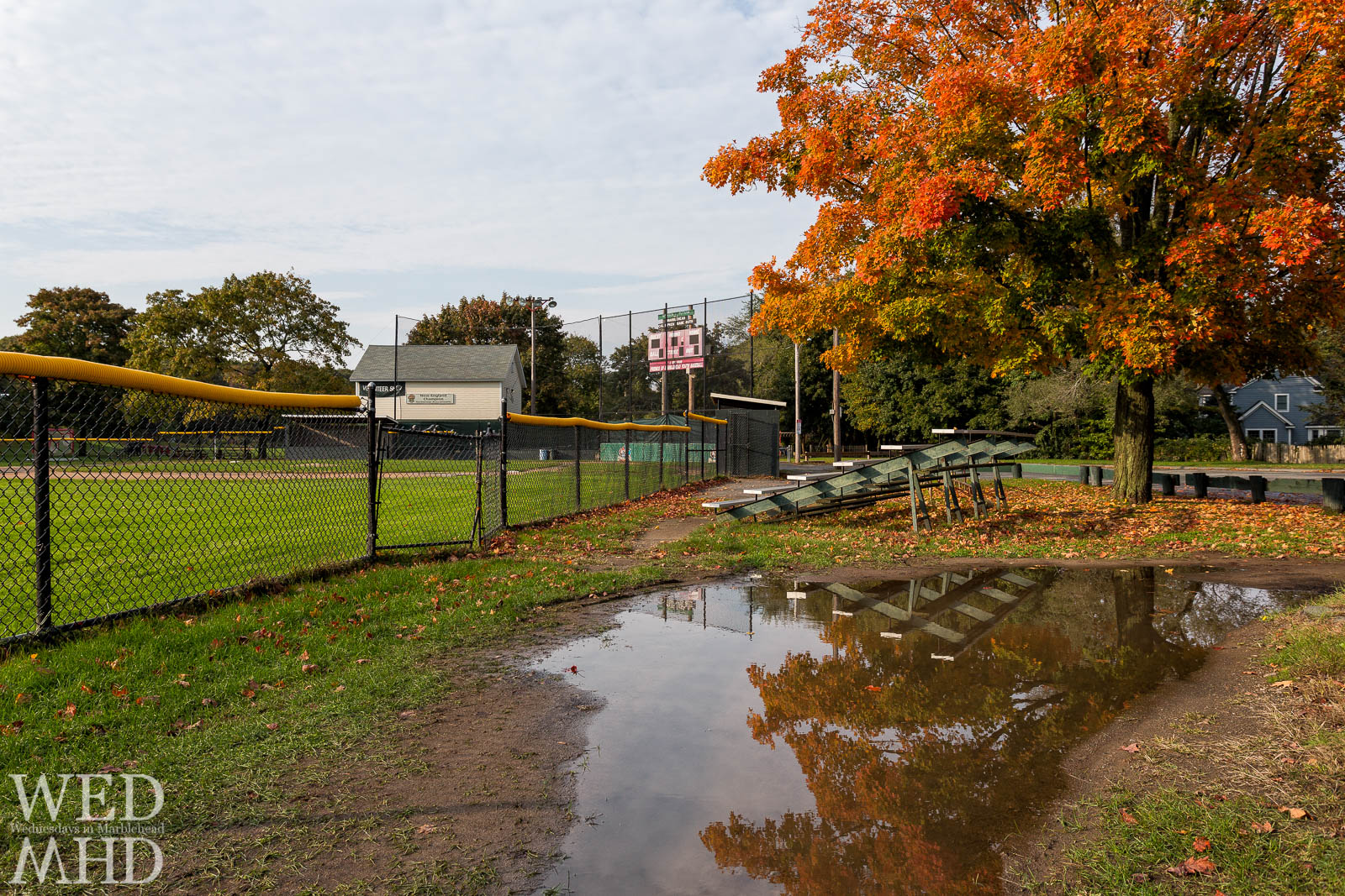 Gatchell Field and the Old Maple Tree
