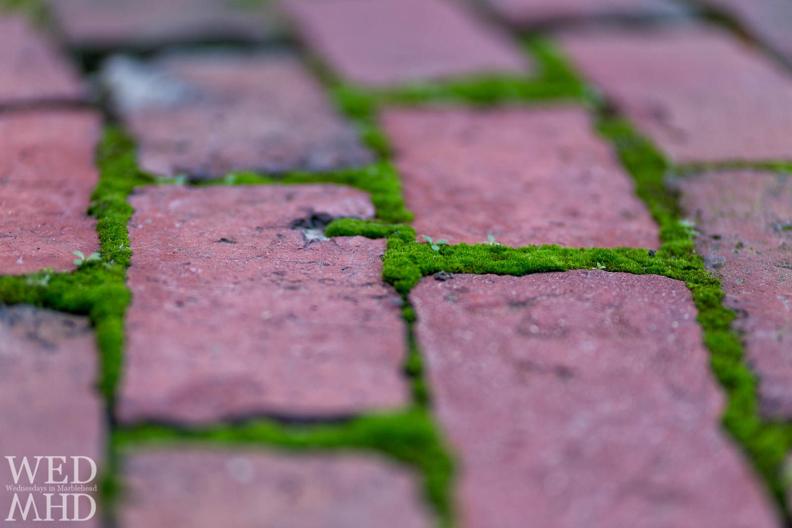 Green Moss and Red Bricks
