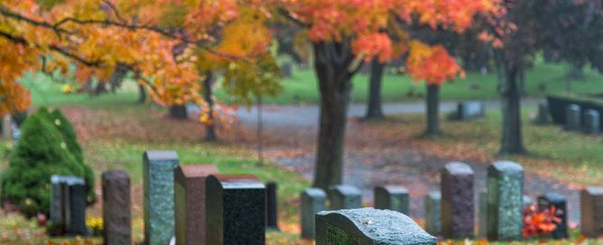 foliage in cemetery