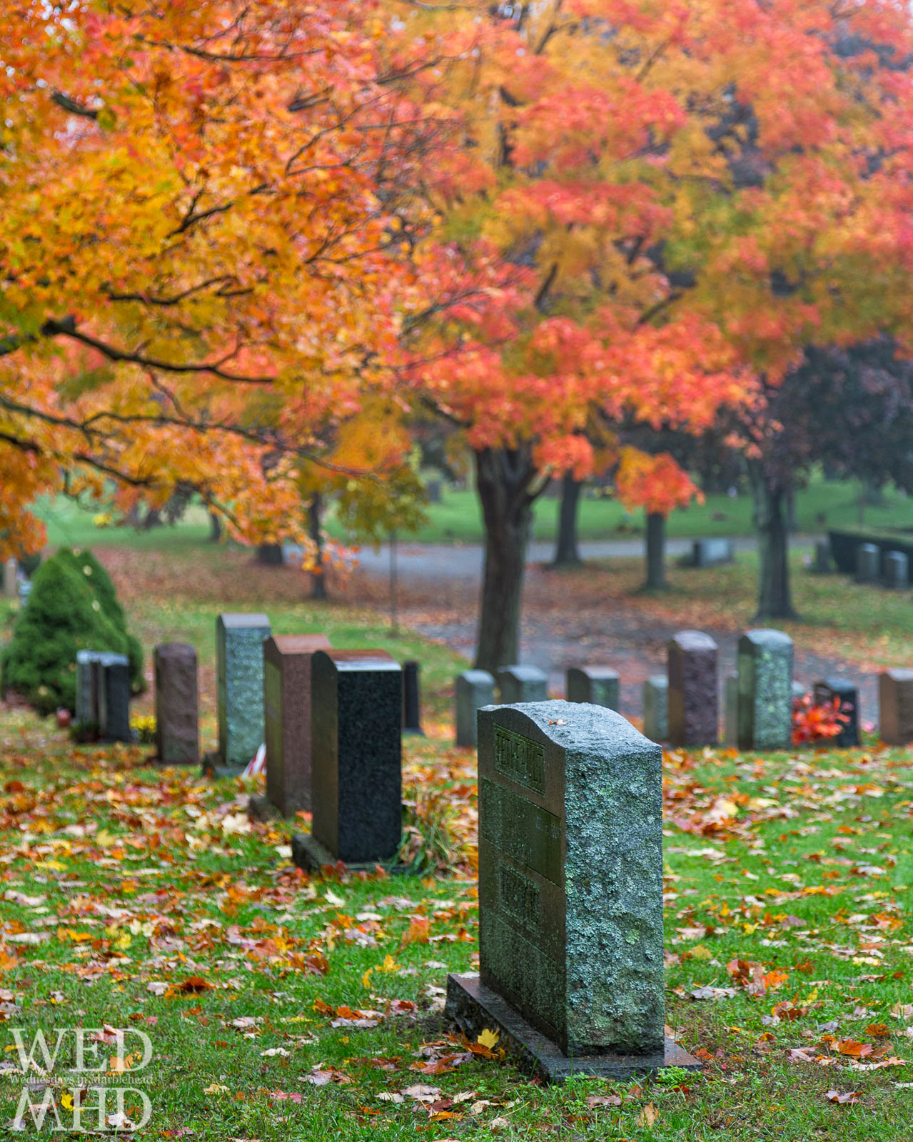 Peak Foliage at Waterside Cemetery