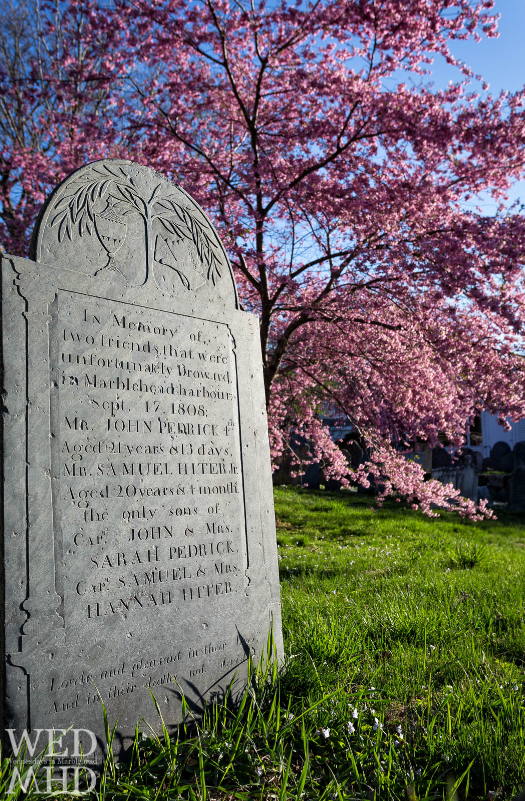The Tombstone Under the Cherry Blossoms