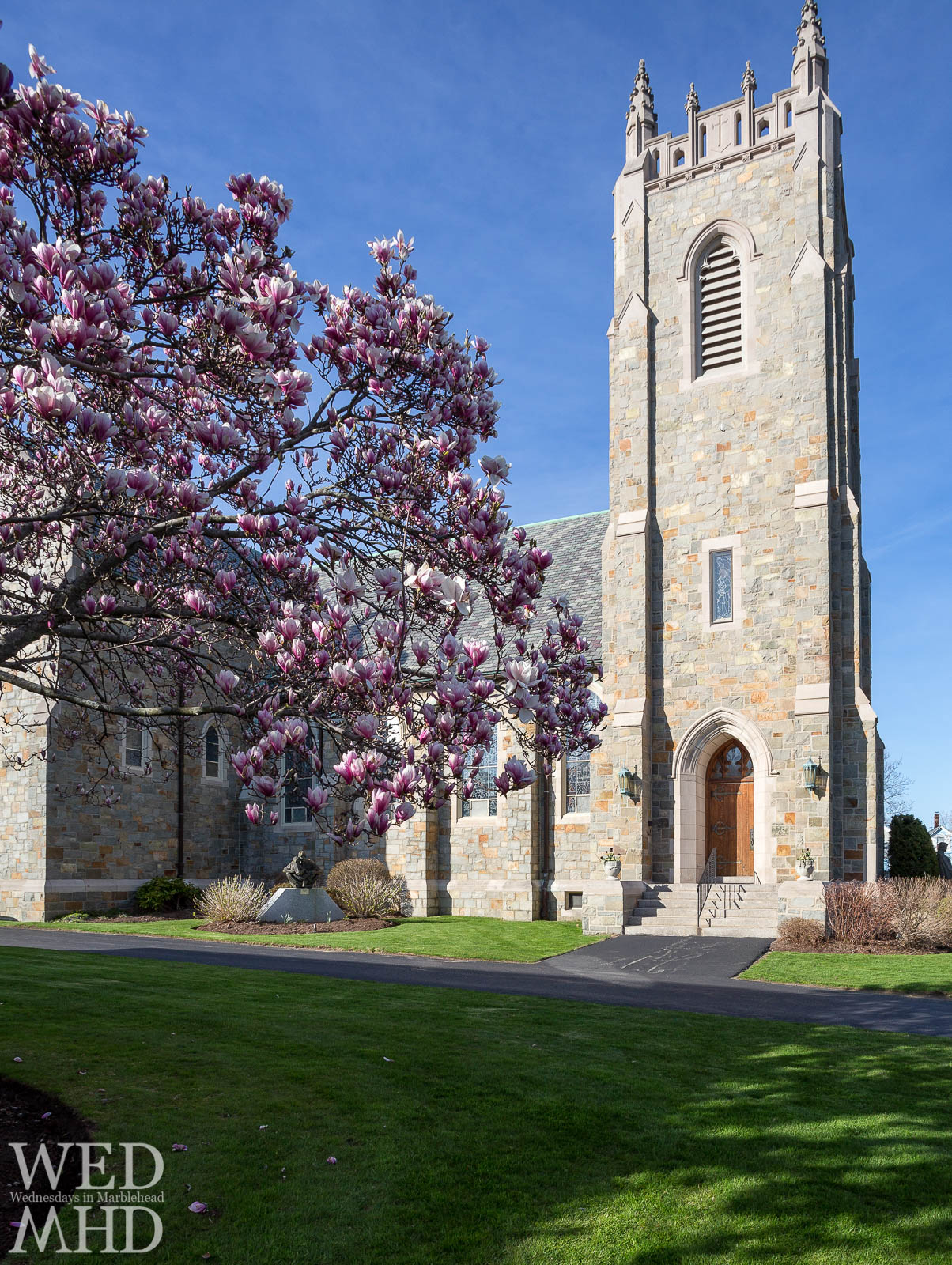 magnolia tree in front of church