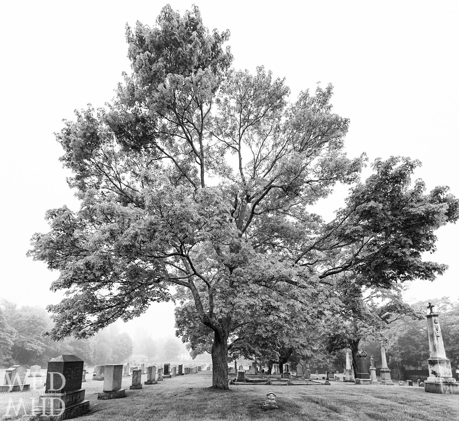 The Great Tree at Star of the Sea Cemetery