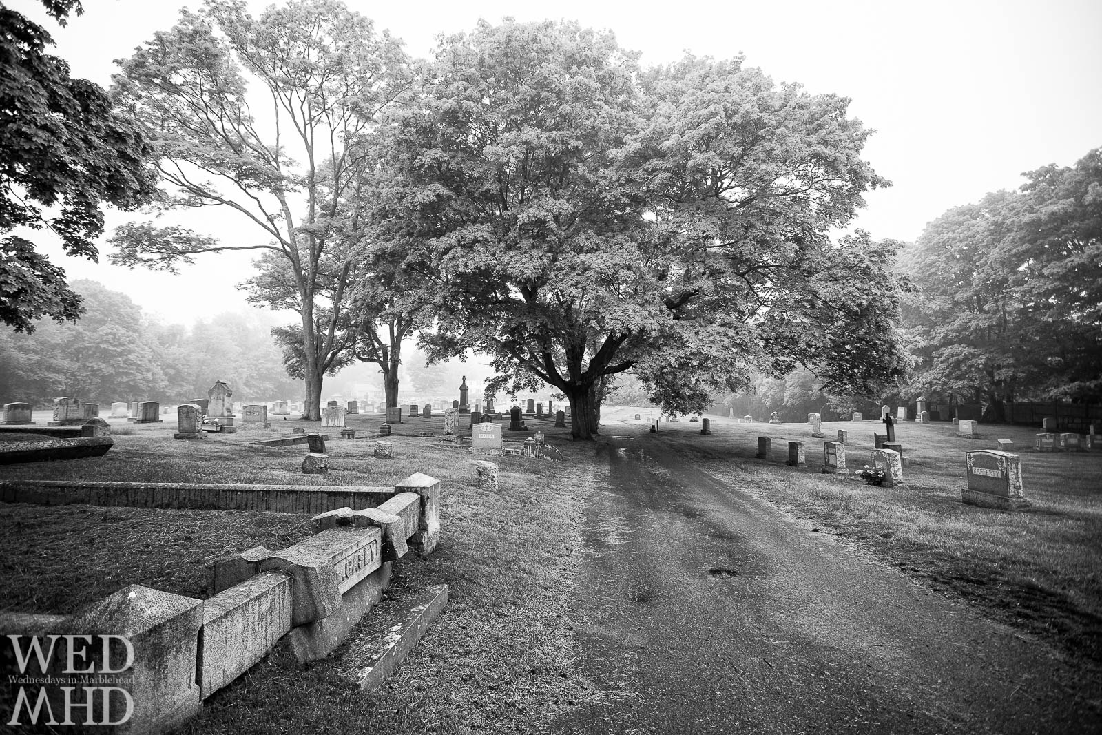 Foggy Morning at Star of the Sea Cemetery