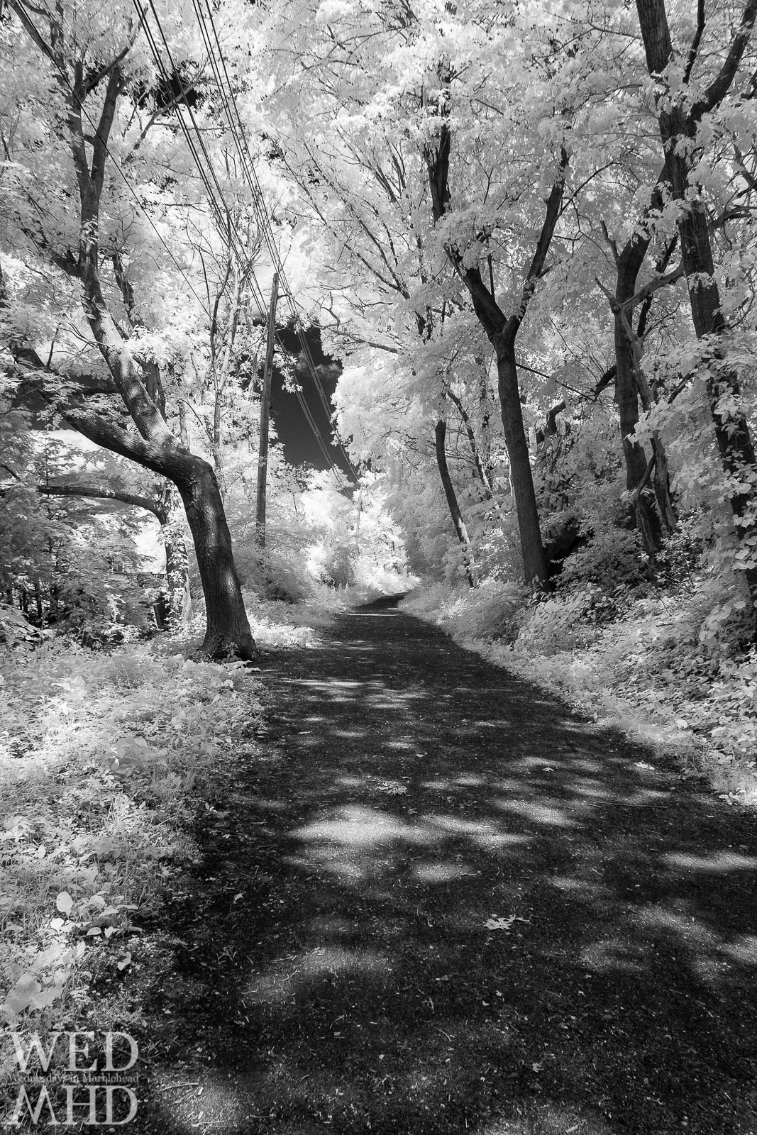 Infrared Marblehead – Along the Rail Trail