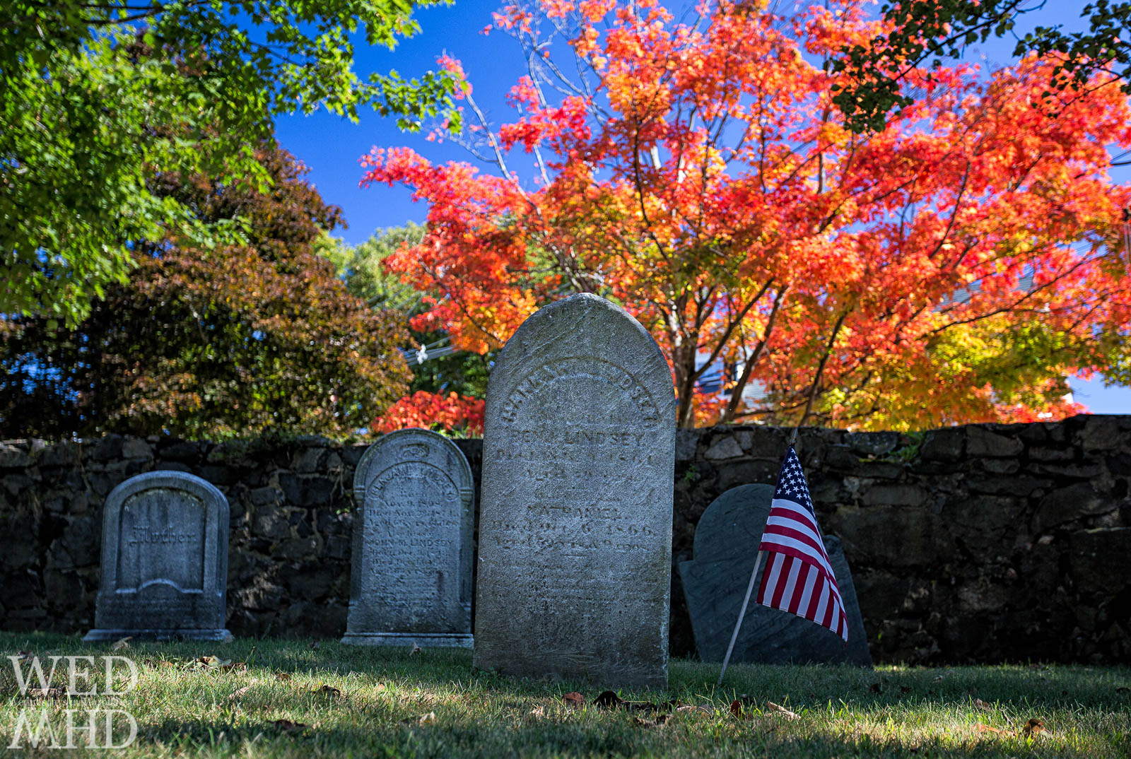 Gravestones under a Maple Tree