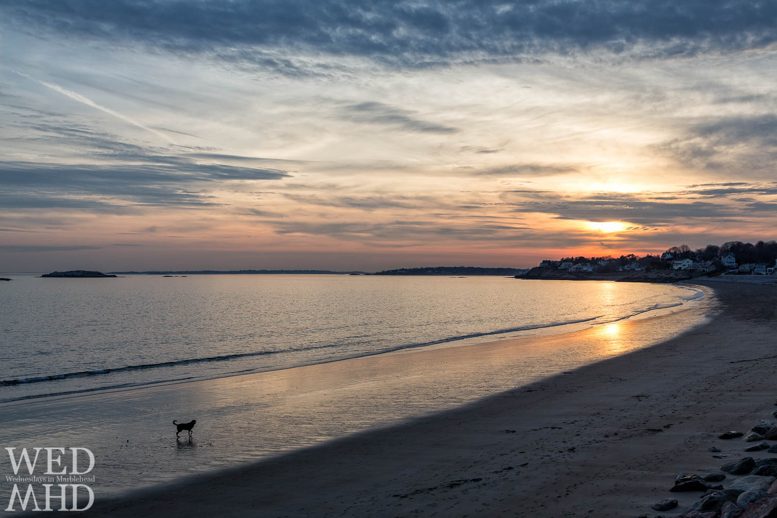 Lone dog walking along beach at sunset