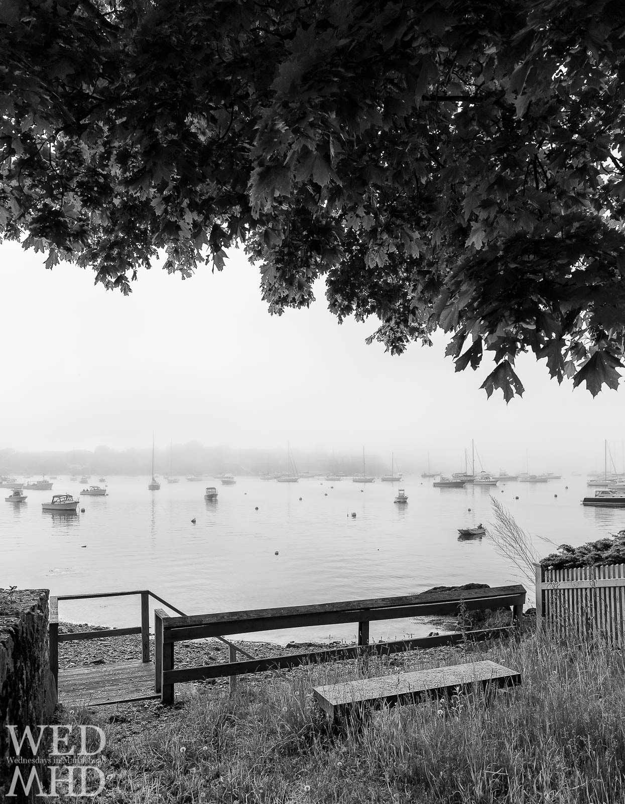 Boats are lost in the fog in this view under a tree canopy from Parker Lane