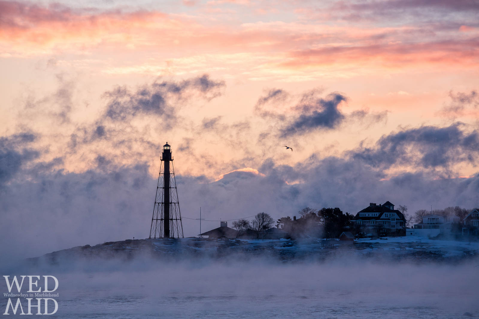 A pink sky colors an arctic morning in Marblehead with a seagull flying over the sea smoke sunrise