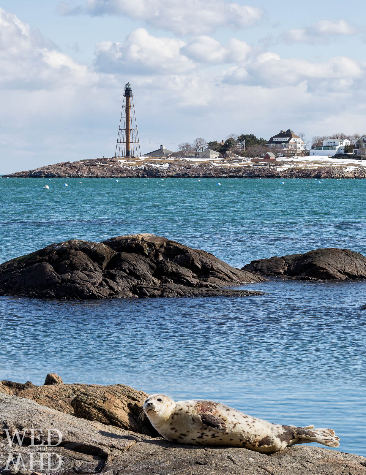 Seal beach in Marblehead takes shape as a seal pup basks in the sun on the rocks at Fort Beach with Marblehead Light in the distance