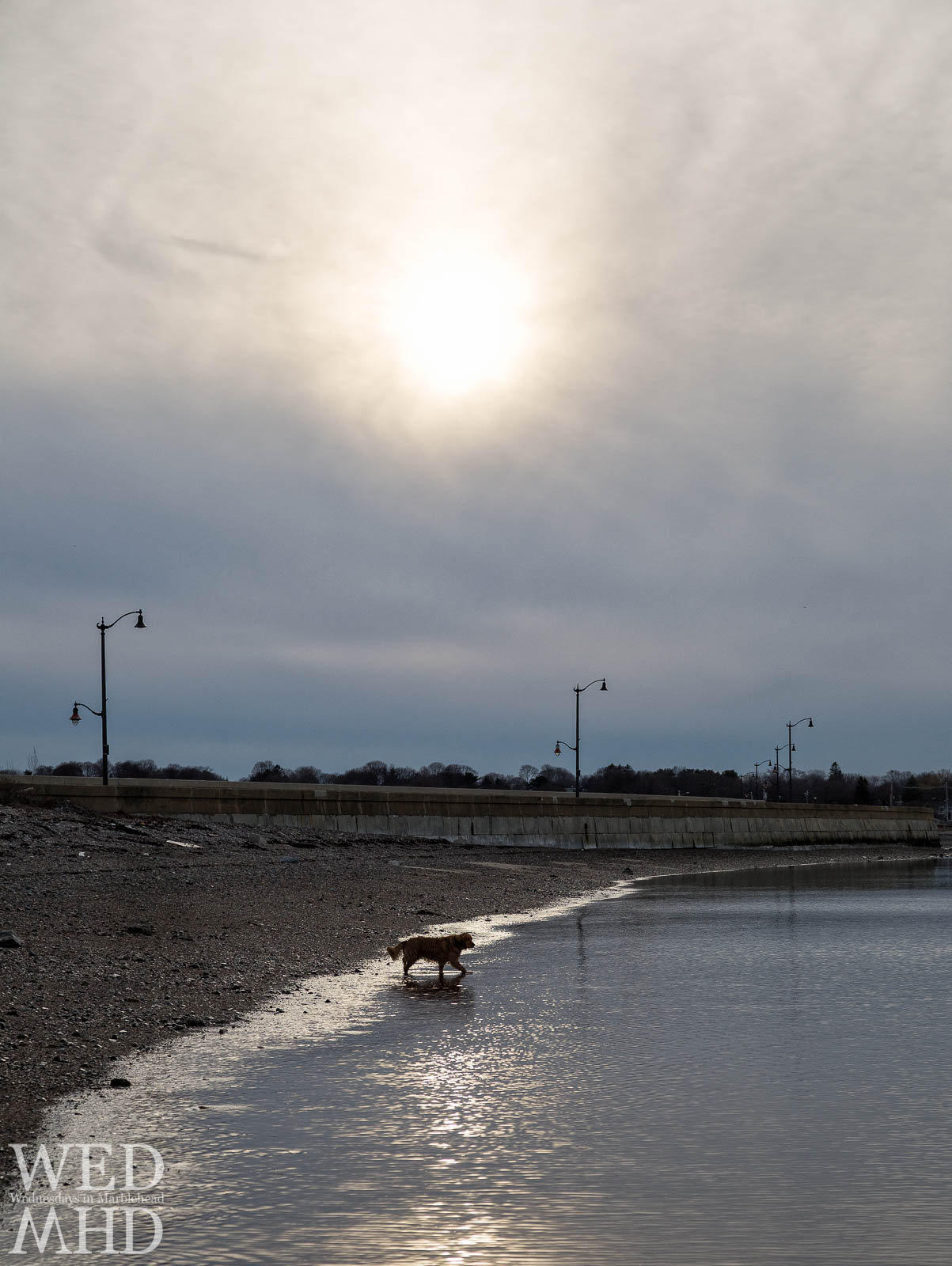 A golden retriever is captured in the light of the setting sun as he heads into the waters of Riverhead Beach in Marblehead