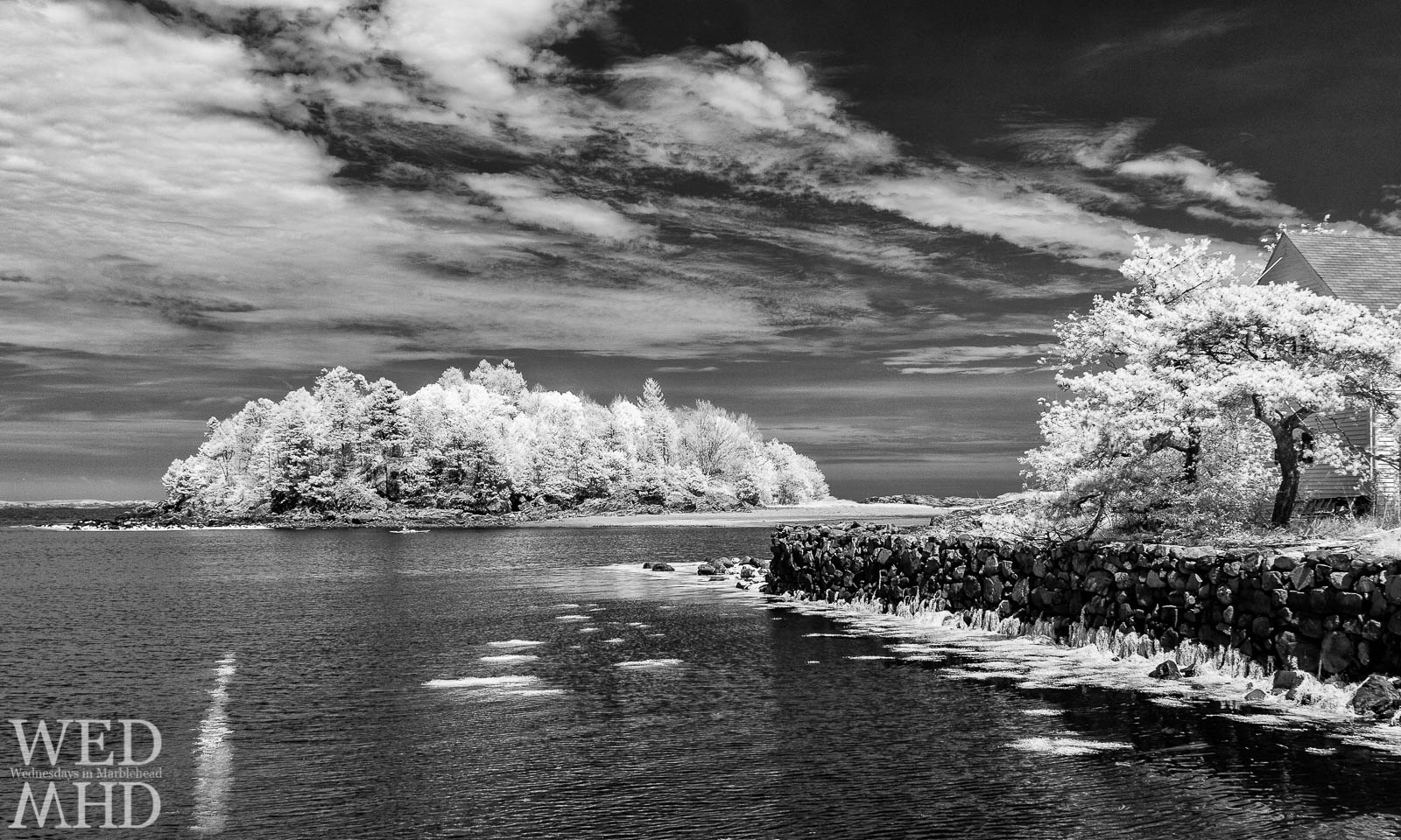 A black and white infrared image of Doliber's Cove sets the leaves aglow against a dark sky and ocean water