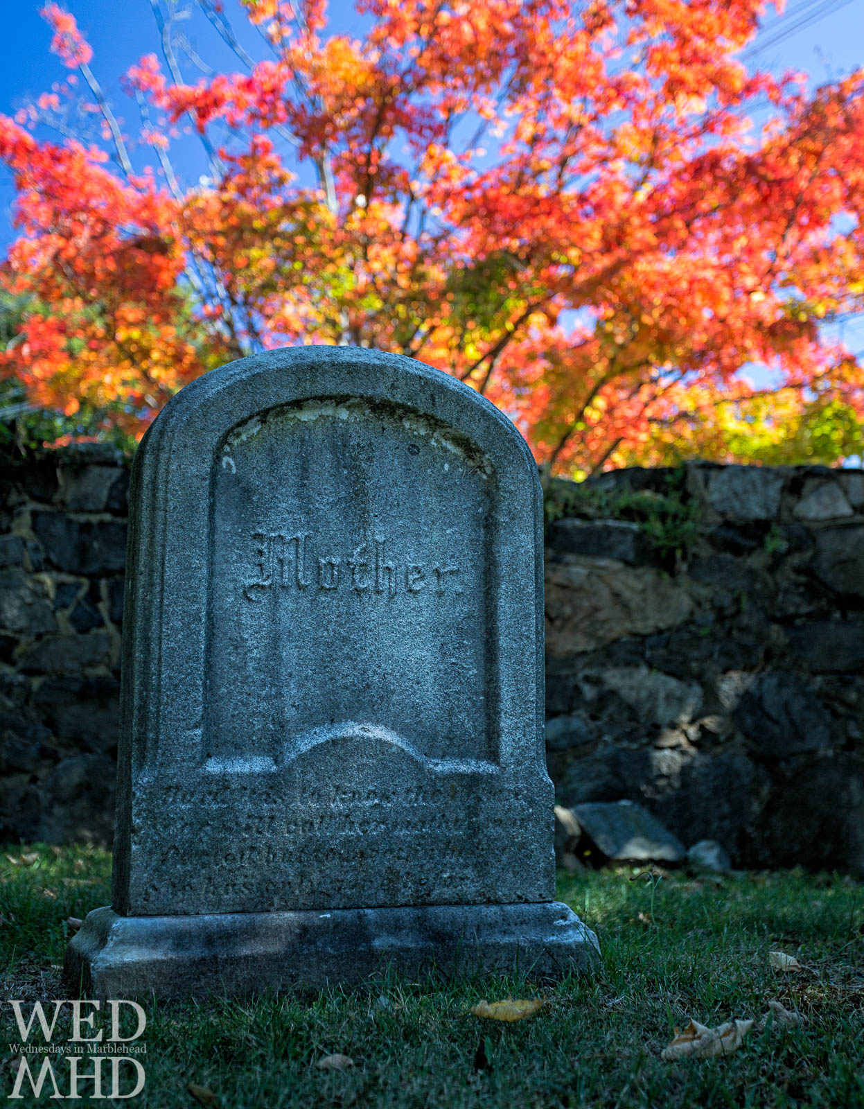 A halloween image of a simple gravestone engraved with the word Mother lies beneath a maple tree in full bloom