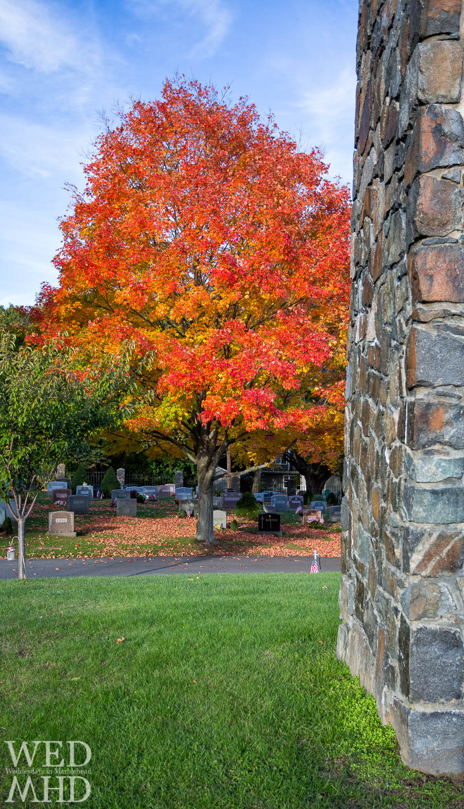 A maple tree exhibits peak foliage at Waterside cemetary on a mid-October day. A rock wall serves as a frame for the Fall view.