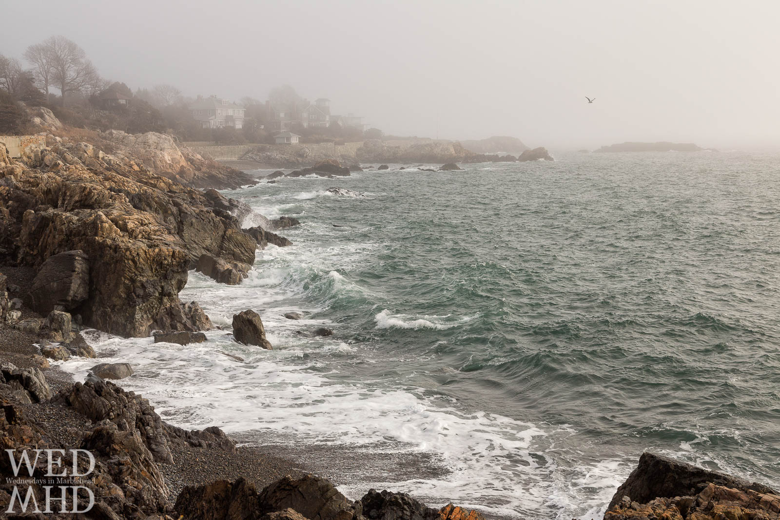 Painterly light washes over the waves at Castle Rock coming ashore in the fog on a warm February morning