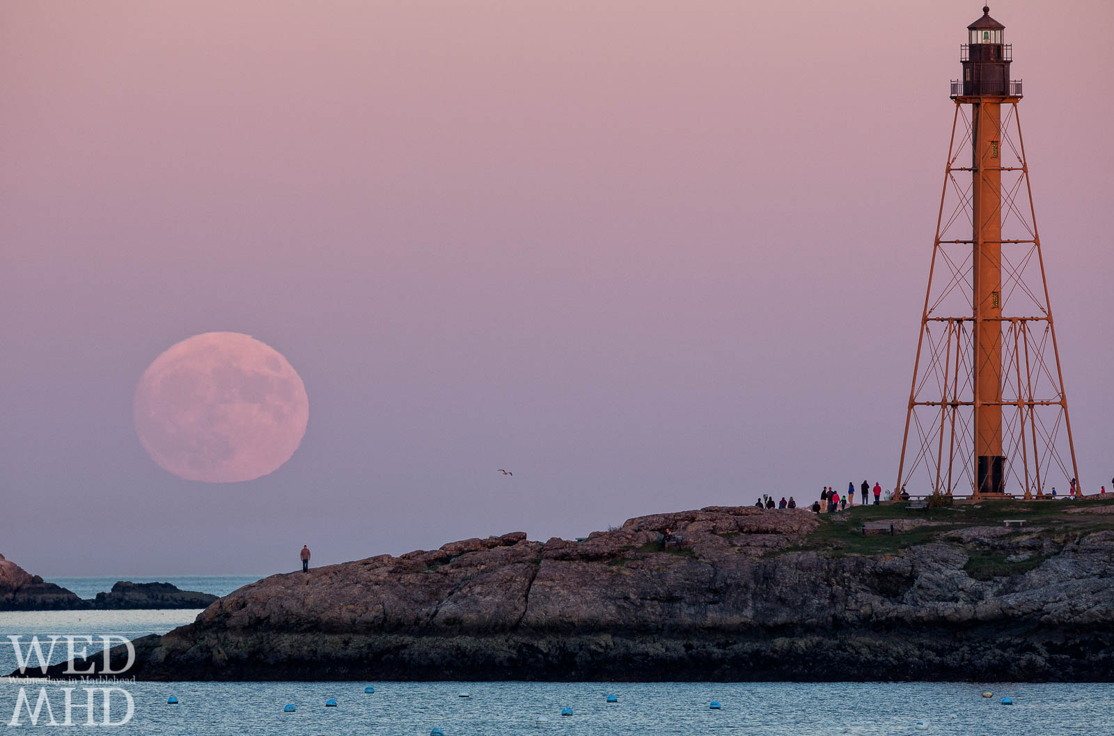 A seagull flies between the moon and Marblehead Light as people gather to watch the moonrise from Chandler Hovey Park