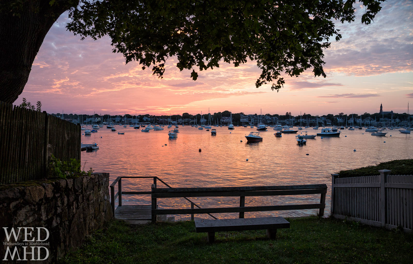 A view of Marblehead harbor is framed by a tree at Parker Lane.