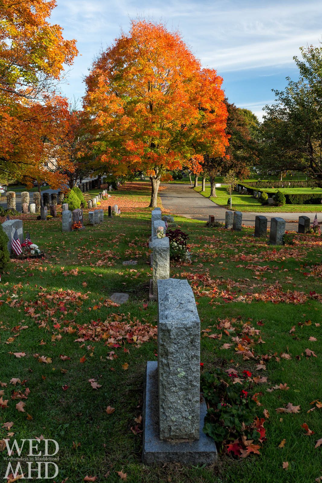 Granite tombstones lead towards a brilliant tree with foliage lit by the setting sun at Waterside Cemetery
