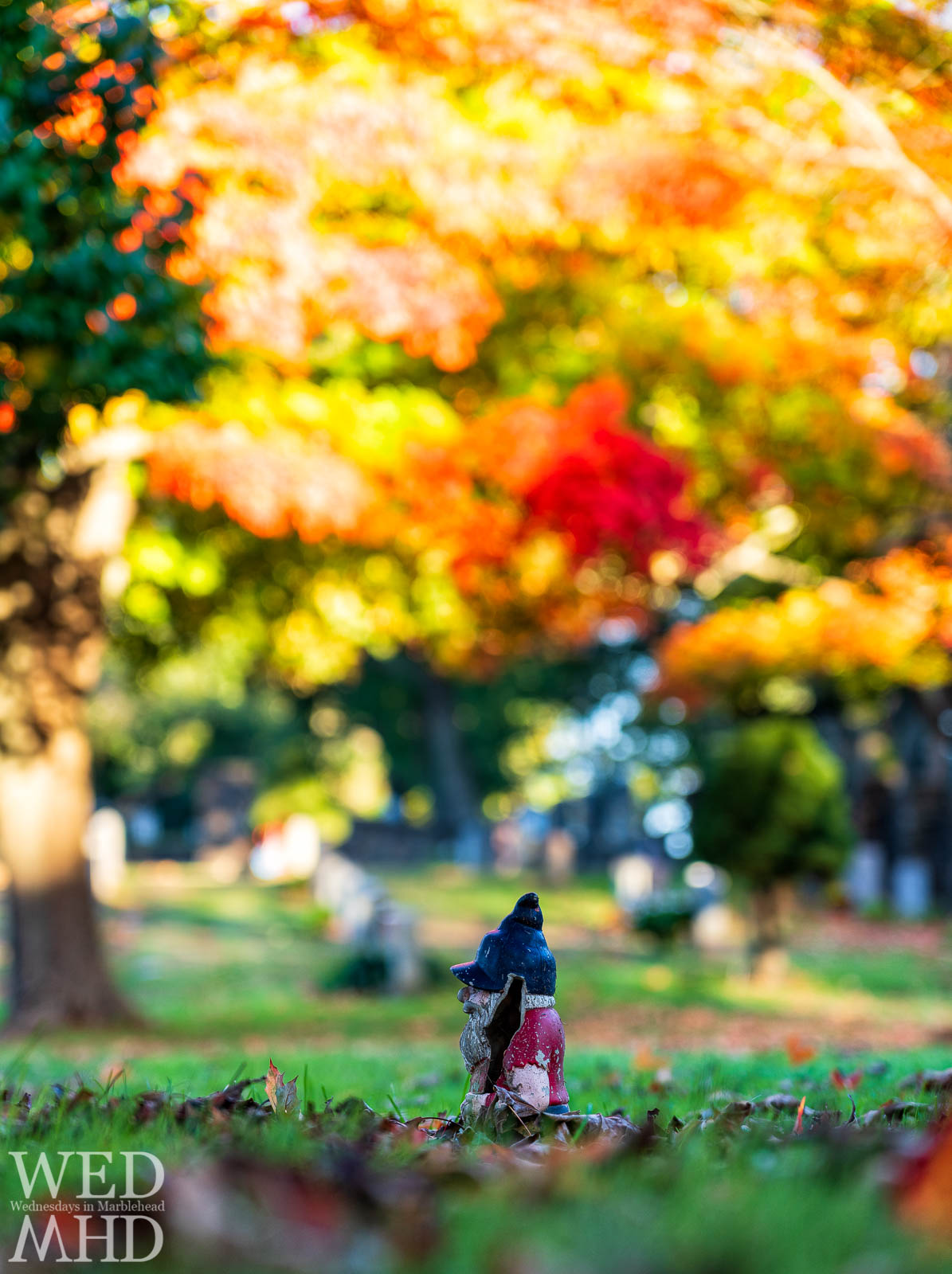 A gnome in Marblehead found among the grounds of Waterside Cemetery on a perfect Autumn morning