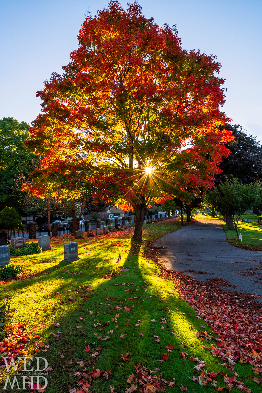 The morning sign rises behind a tree displaying peak foliage at Waterside Cemetery on a mid-october day. The sun backlights the leaves to help illuminate their varying colors