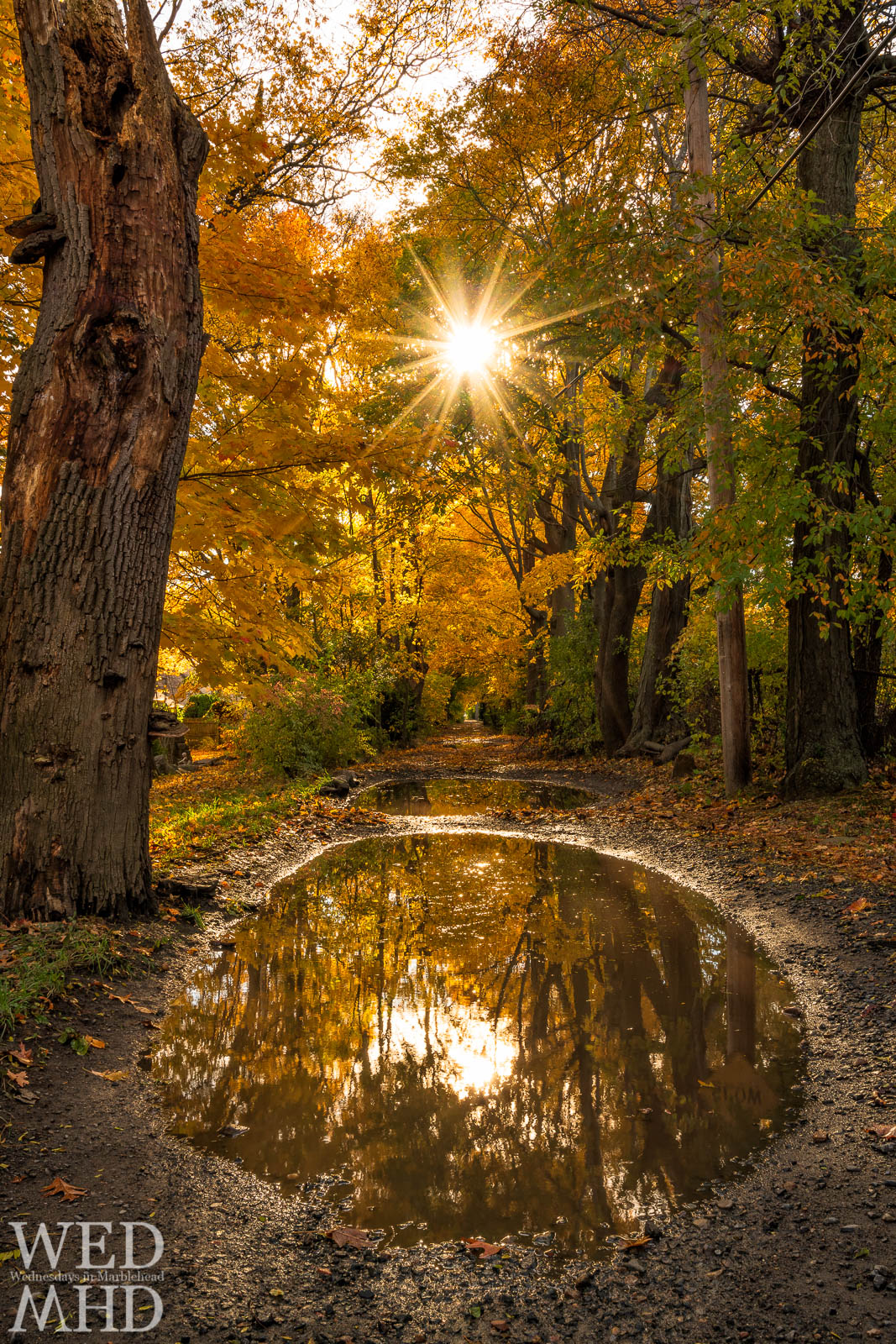 Sunlight beams over Ware Lane with peak foliage bathing the dirt road in golden light reflected in a puddle of rainwater