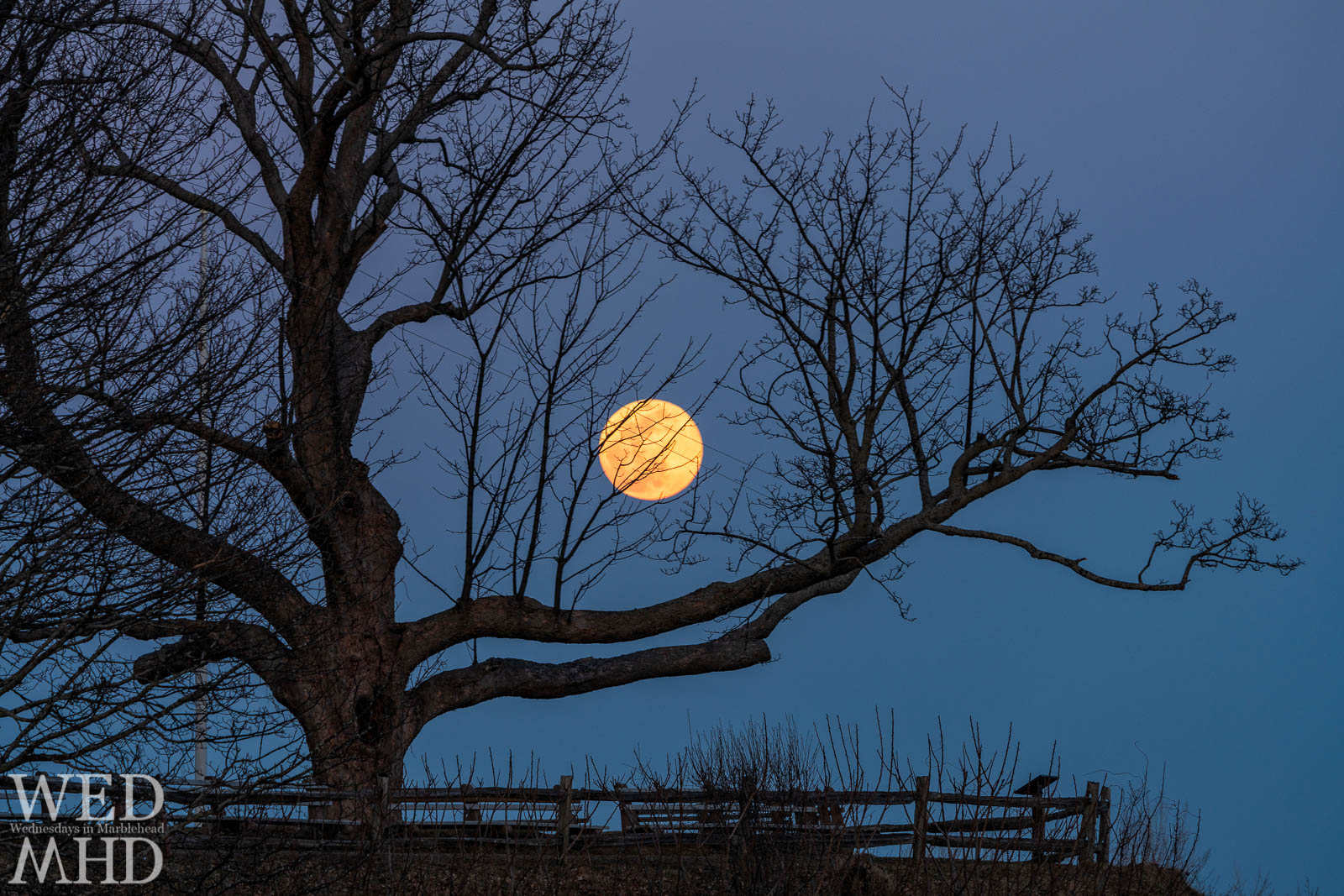 The full moon rises over Fort Sewall and behind the great tree at its entrance