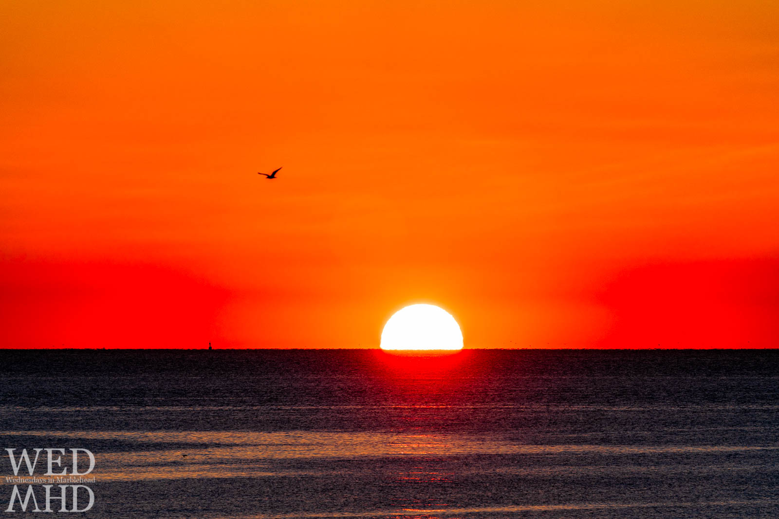 A bird flies over an ocean sunrise on a clear morning in Marblehead
