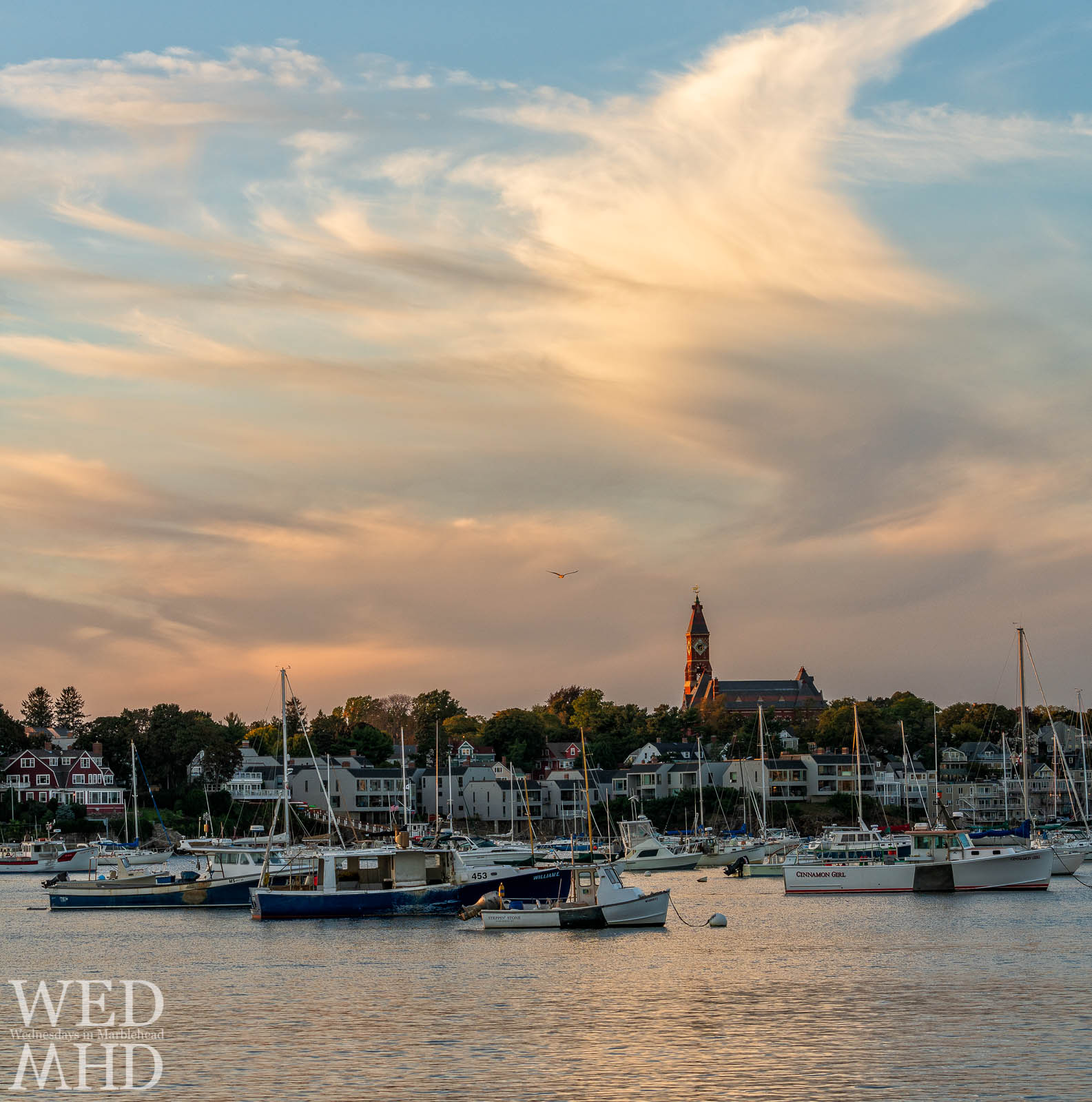A sea gull is lit in red light as it flies through the last of sunset's light over a crowded Marblehead Harbor