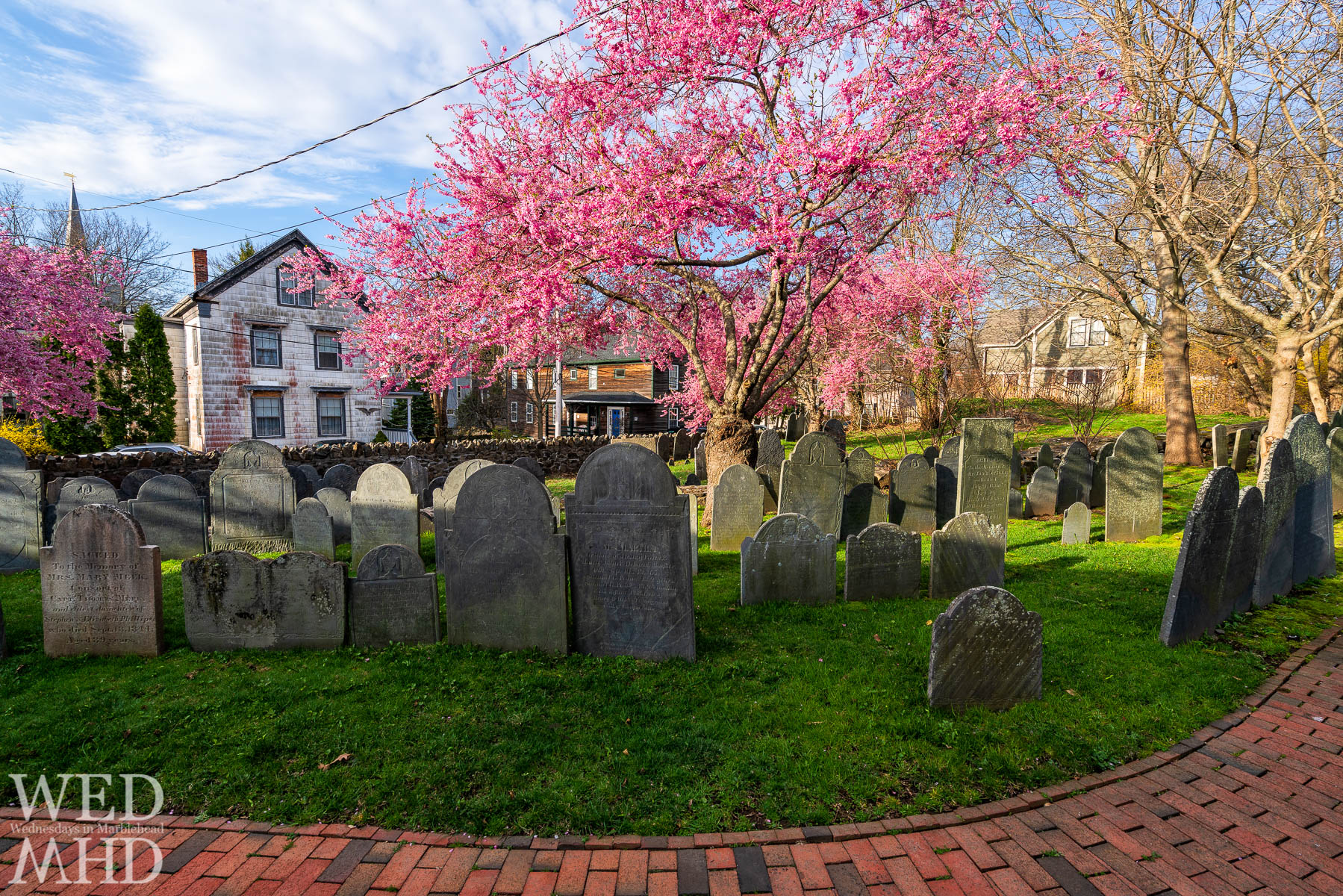 As the days warm, spring beckons and all signs point towards the cherry blossoms coming to Marblehead and the Harris Street cemetery
