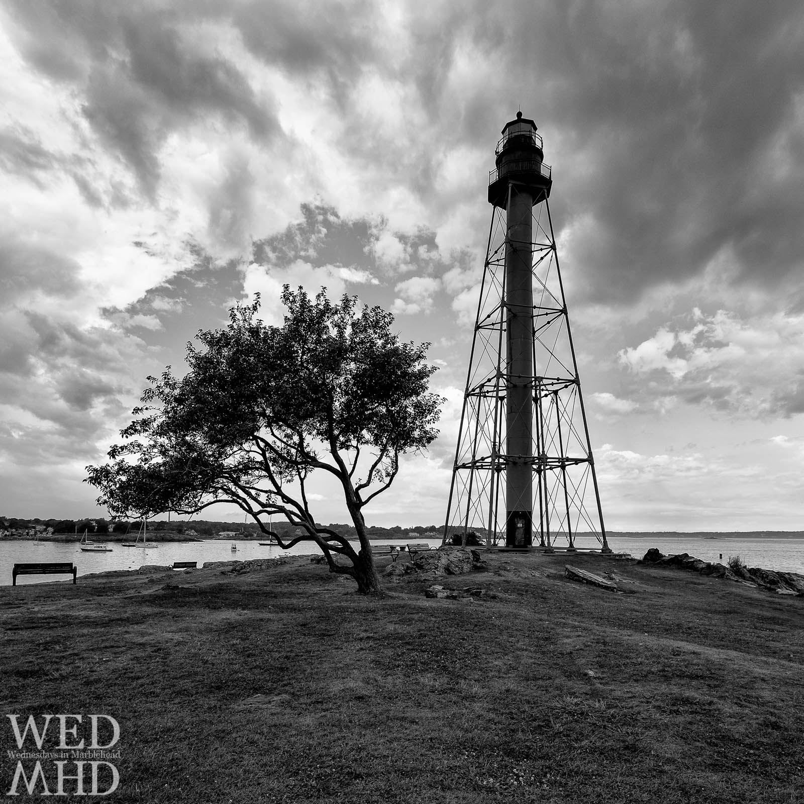 A weathered tree steals focus from Marblehead Light in this black and white image captured at Chandler Hovery Park