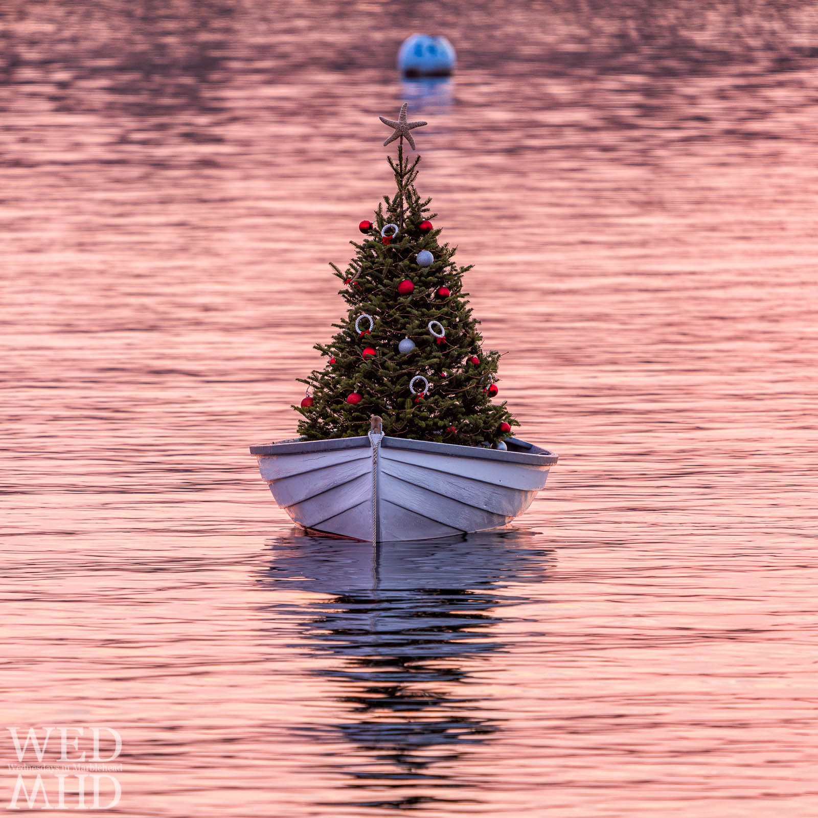 The annual tradition of the First Harbor company's Christma tree in a boat is captured at dawn in little harbor as the colors of the sky reflect in the still waters