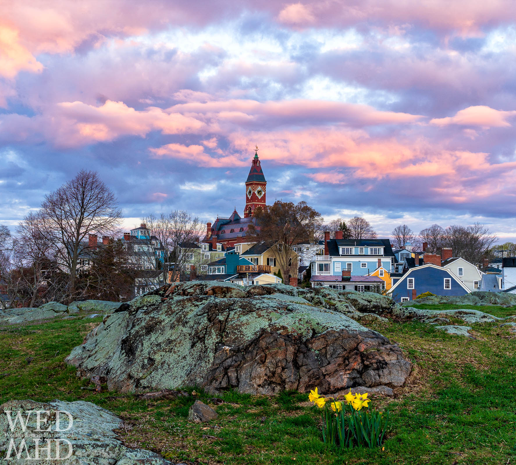 Daffodils signal the onset of spring in Crocker Park with a backdrop of Abbot Hall and clustered houses under a beautiful sunrise sky
