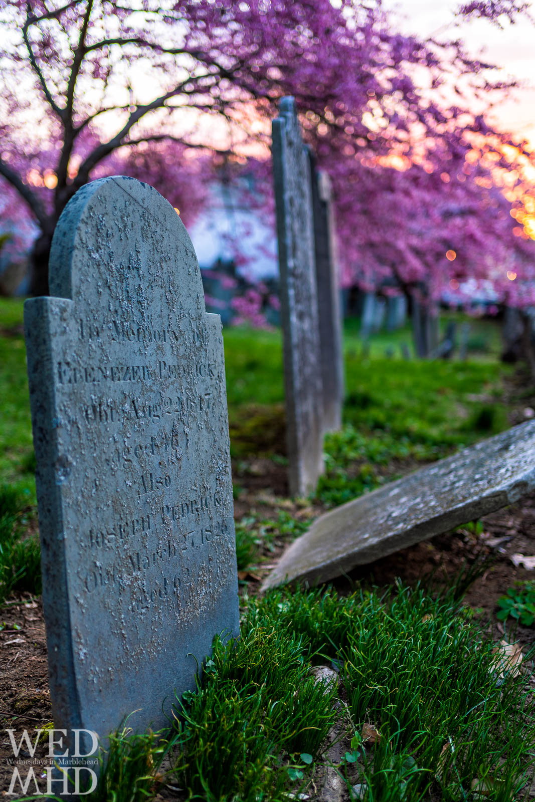 Back to Harris Street and this sunrise capture of tombstones and cherry blossoms on a spring morning in Marblehead