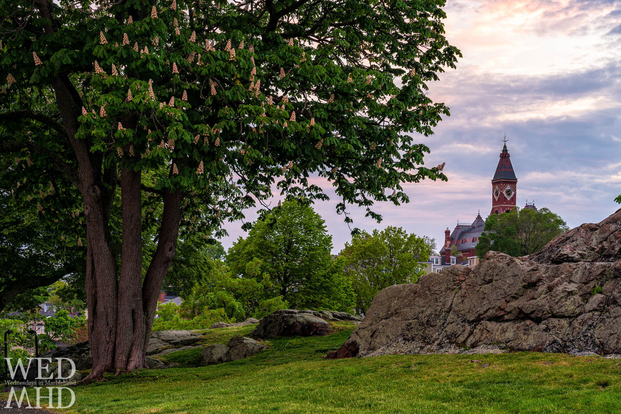 A chestnut tree in bloom at Crocker Park serves as a nice counter to Abbot Hall on a late May evening in Marblehead